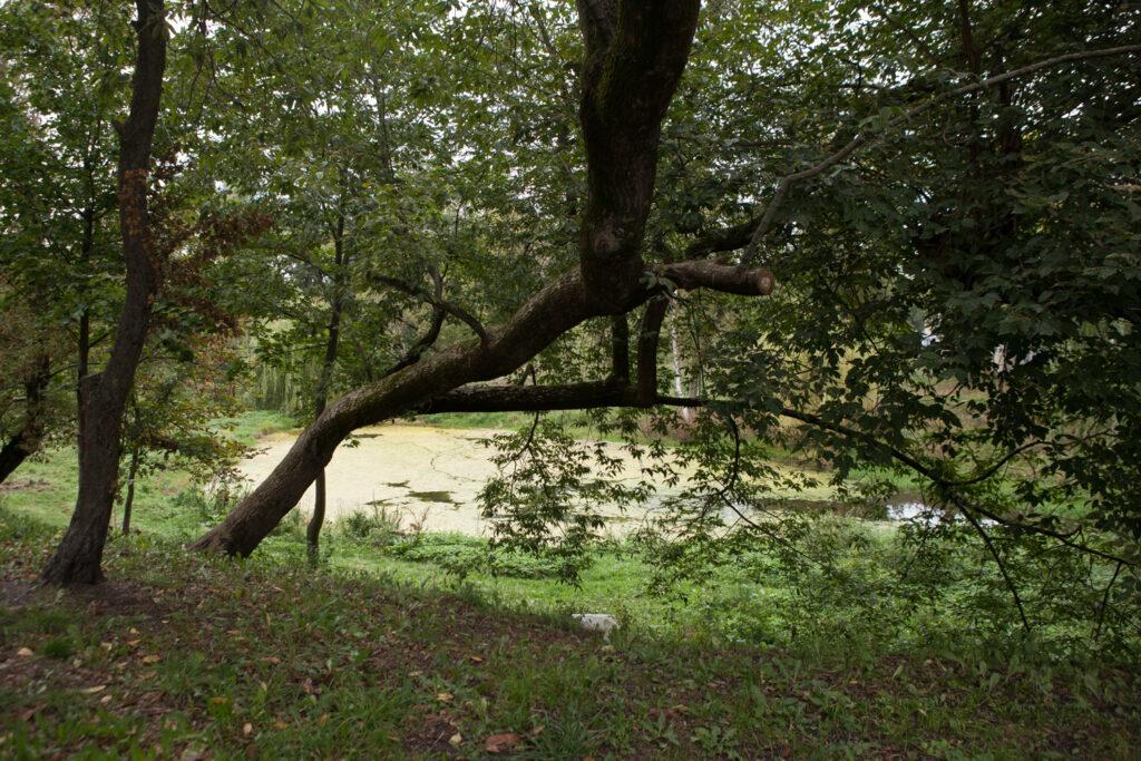 staw w parku imienia księdza Tadeusza kirschke parku Nadolnik