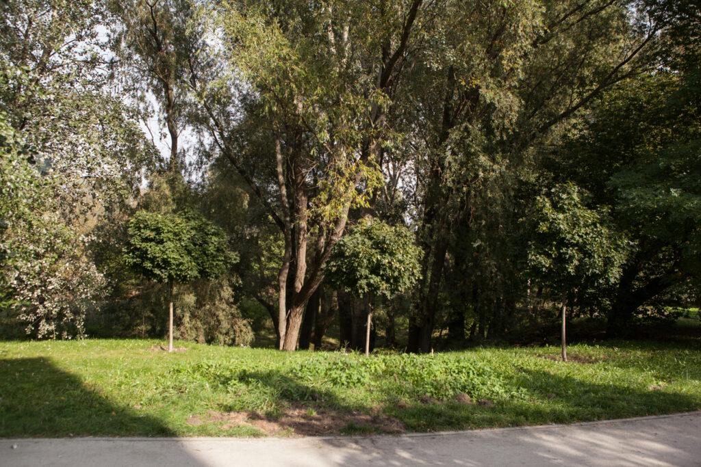 alejka w parku imienia księdza Tadeusza kirschke parku Nadolnik